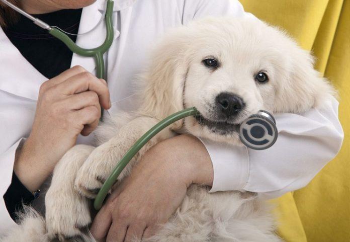 Mở cơ sở kinh doanh thuốc thú y